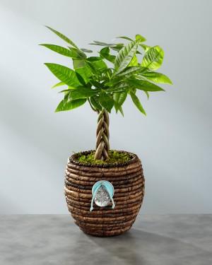 Peaceful Surroundings Braided Zen Plant