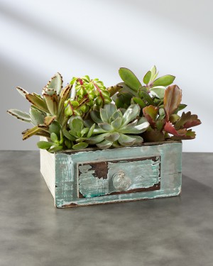 Perfect Vision Succulent Windowbox